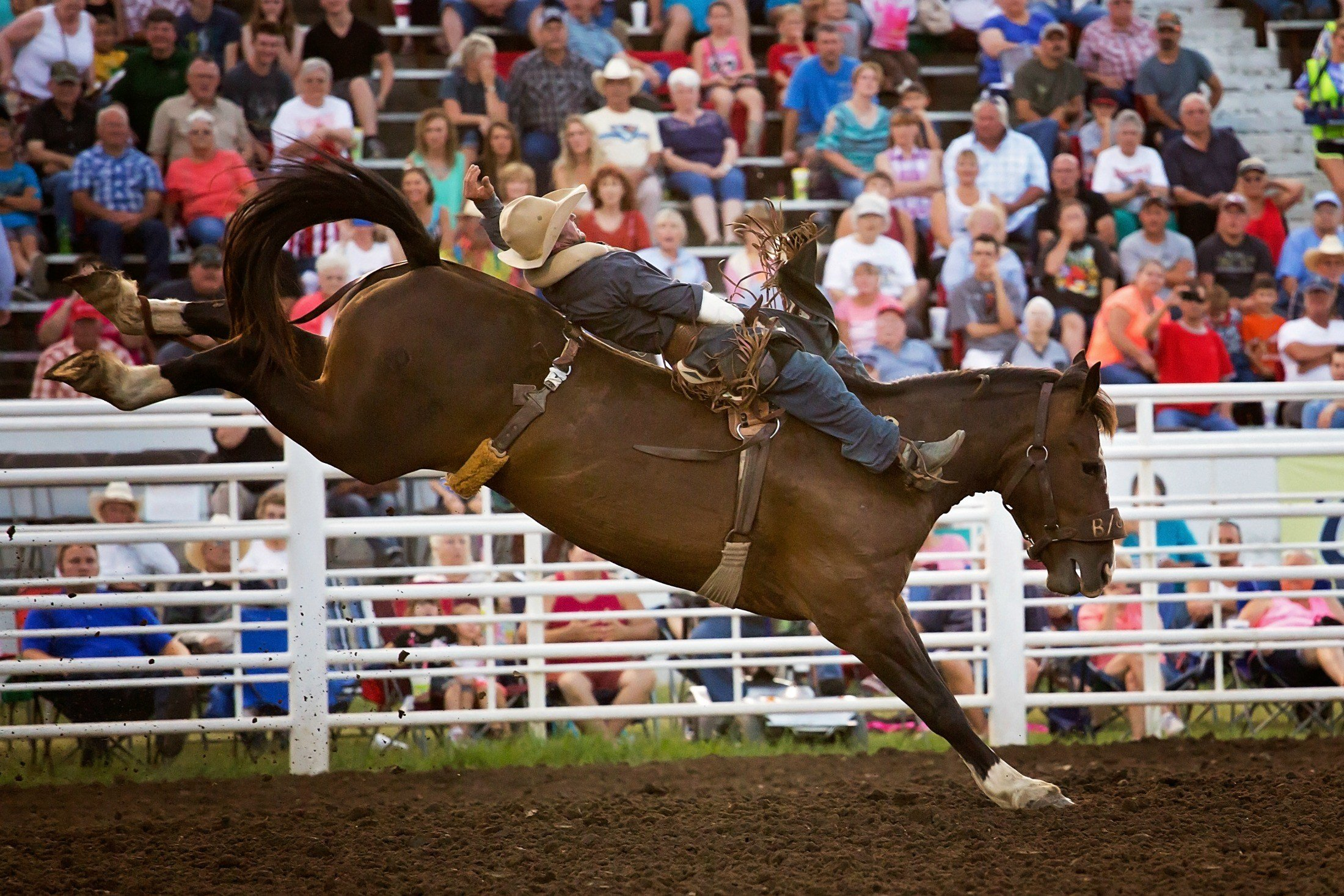 A bareback rider competes at the 2015 Inter-State Fair and Rodeo in Coffeyville. This year's Fair and Rodeo is August 12-19 at Walter Johnson Park. Photo by Quick Draw Design.