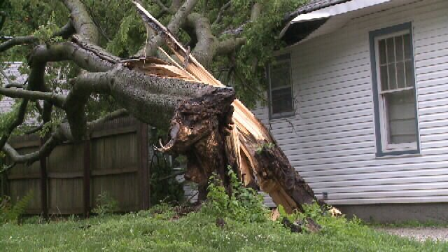 Tree downed by storm