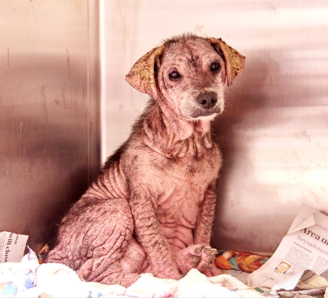 Missouri Humane Society seizes 28 dogs in SW Missouri KOAM TV 7