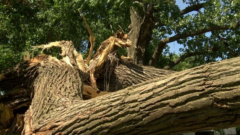 Tree Damages Home Resident Seeks Payment Koam Tv 7